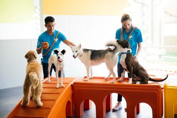 start Dogtopia franchise